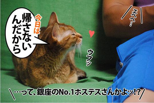 20110818_05.jpg