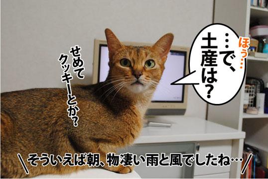 20110822_05.jpg