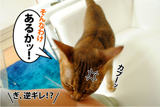 20110826_04.jpg