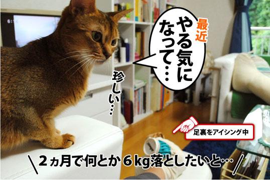 20110829_02.jpg