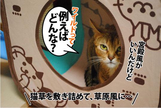 20110908_06.jpg