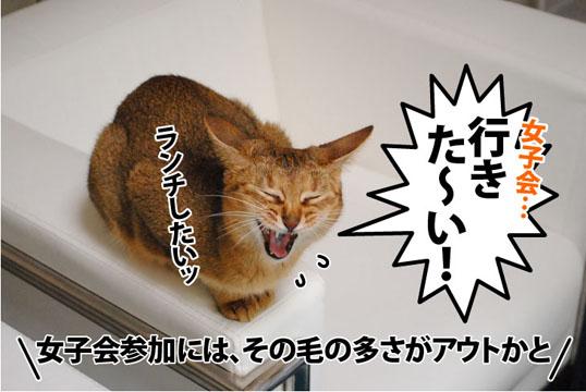 20110913_03.jpg