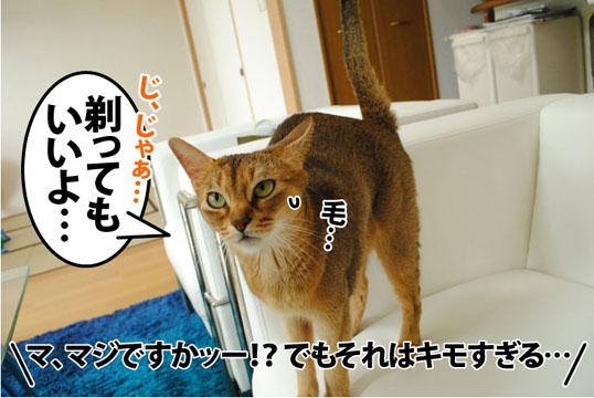 20110913_04.jpg