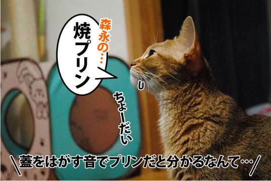 20110921_01.jpg