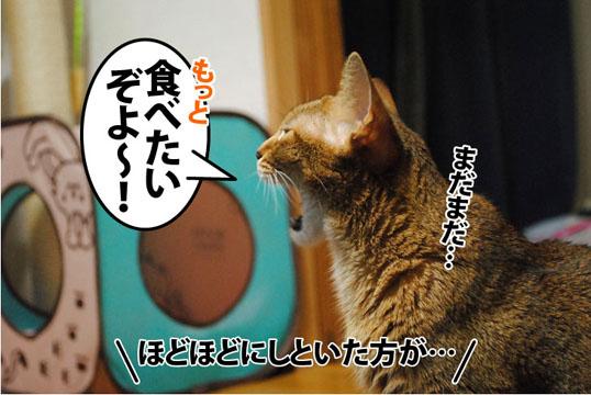 20110921_04.jpg