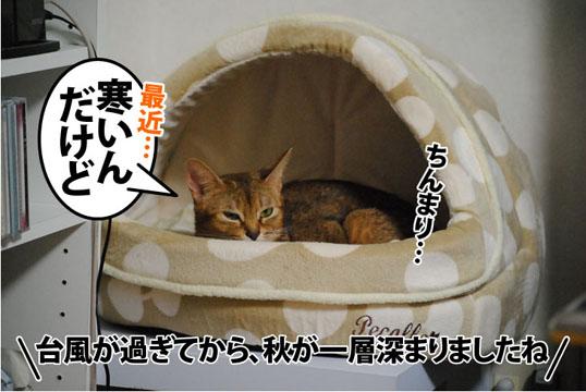 20110923_01.jpg