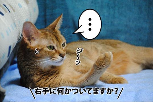 20110928_01.jpg