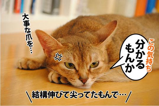 20110929_02.jpg