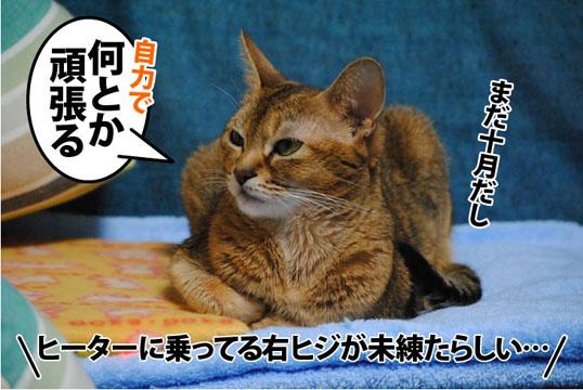 20111003_03.jpg