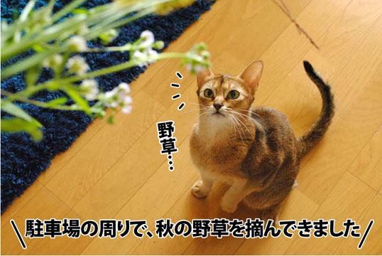 20111007_02.jpg