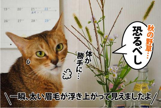 20111007_06.jpg
