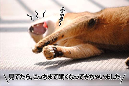 20111009_02.jpg