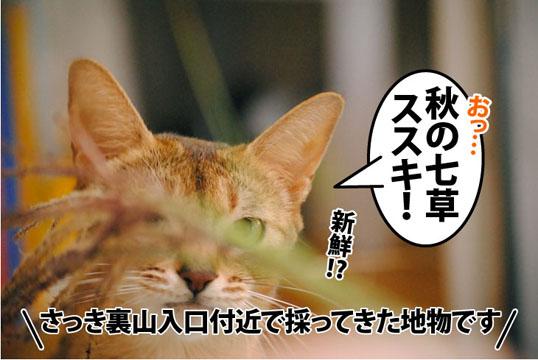 20111012_01.jpg