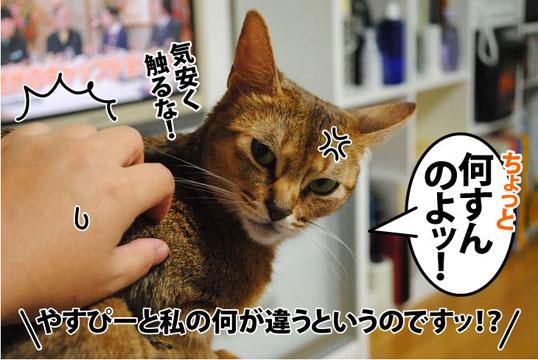 20111022_05.jpg