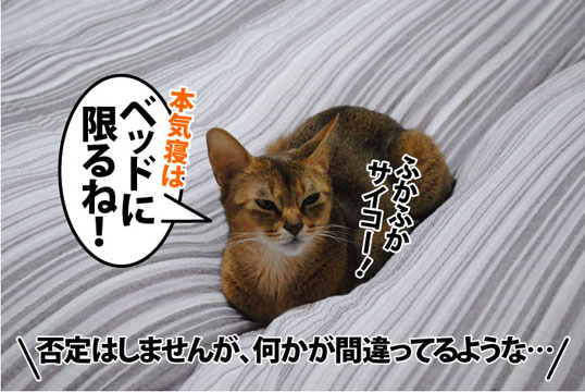 20111025_03.jpg