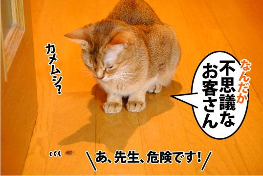 20111102_02.jpg