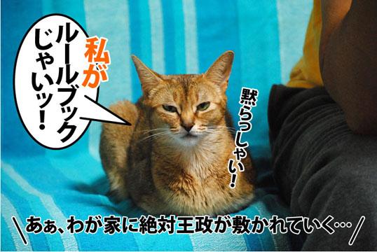 20111107_04.jpg