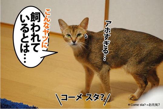 20111108_05.jpg