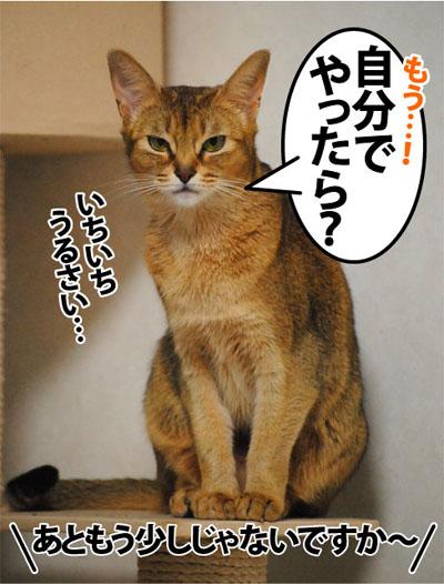 20111109_04.jpg