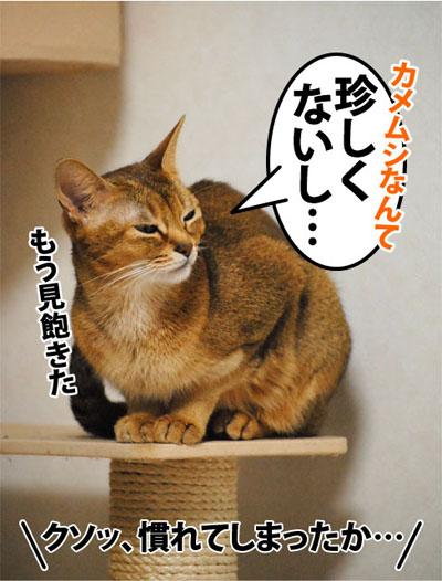 20111109_05.jpg
