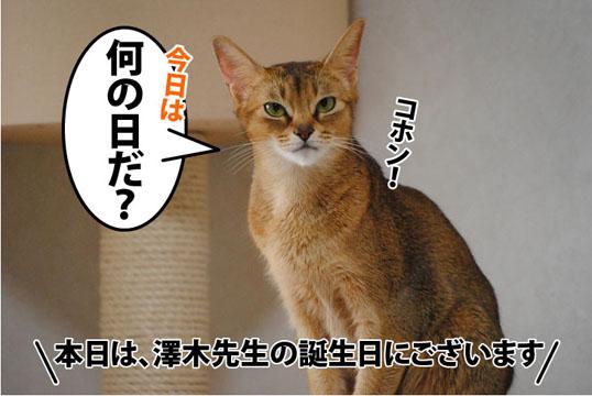 20111114_02.jpg