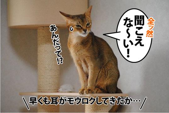 20111114_05.jpg