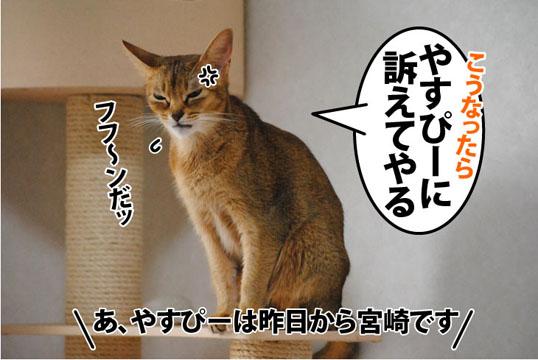 20111114_06.jpg