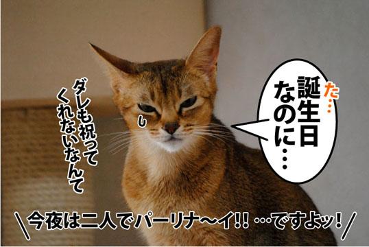 20111114_07.jpg
