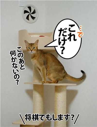 20111115_06.jpg