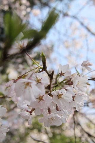 2011_0428_10.jpg