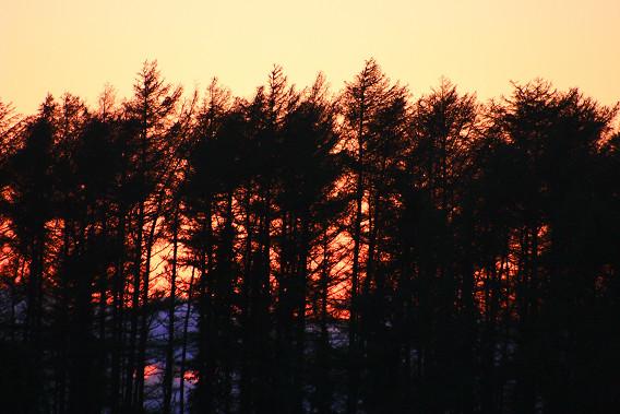 防風林への落日DPP処理
