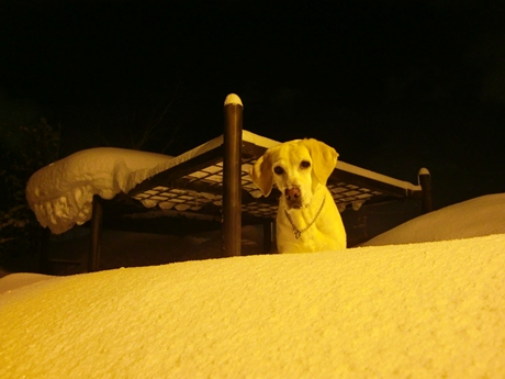 累計降雪量は、336cm。