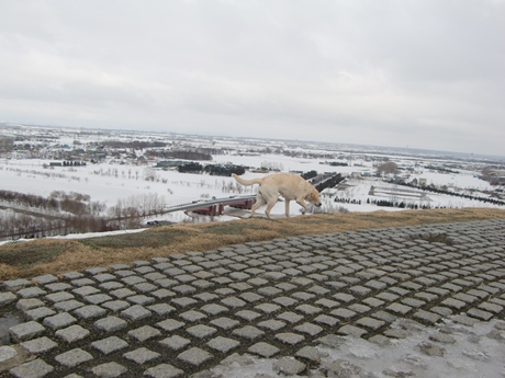 札幌市内全体を見渡す展望台