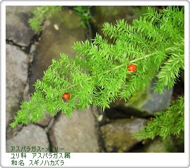 350asuparameiri0225a.jpg