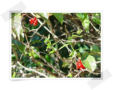 350binankazura91205b1.jpg