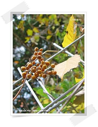 350hekusokazura91109b1.jpg