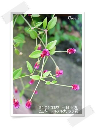 350senichikobou90903.jpg