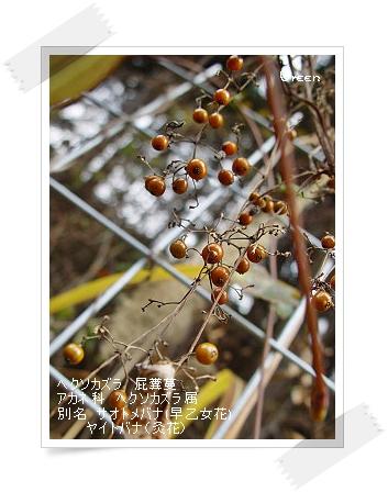 350yamanoimo91202d1.jpg
