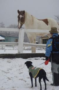 八ヶ岳 滝沢牧場 馬