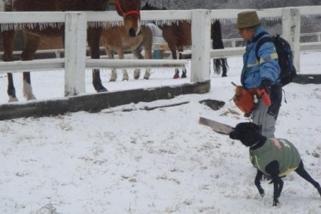 滝沢牧場 八ヶ岳 馬