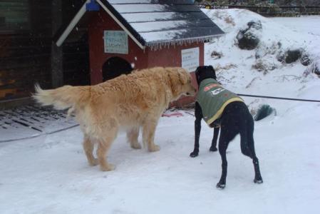 八ヶ岳 滝沢牧場 犬