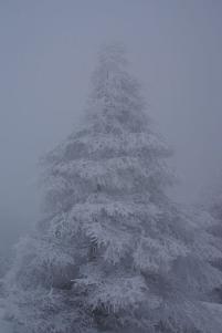 八ヶ岳 スノーシュー