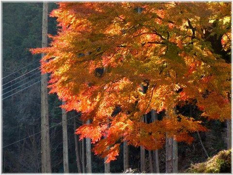 何でもない木の紅葉