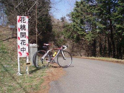 登りはキツい、林道 上ノ貝戸線から花桃の郷へ