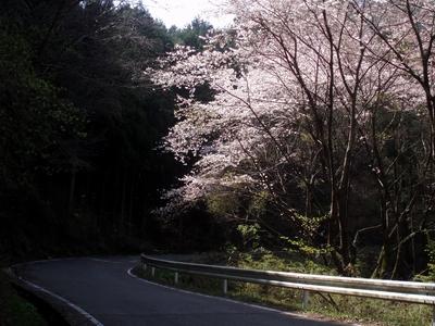 2010年 桜の季節の陣見山線1