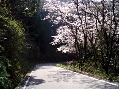 2010年 桜の季節の陣見山線2