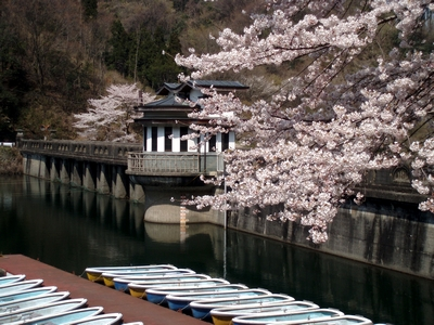 2010年 円良田湖の桜