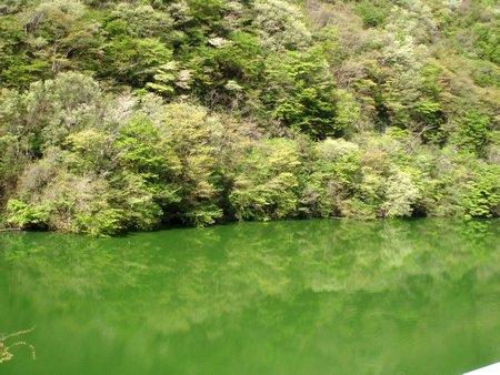 新緑がシーグリーンの川面に