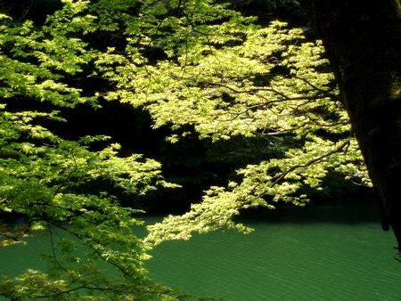 新緑が眩しい!@鎌北湖