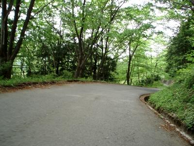 久しぶりの新緑の丸山林道